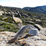 Wire basket on dolerite boulders on a mountain plateau, with Snowy South in the background.