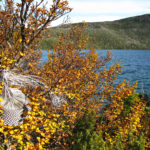 Wire basket nestled in the golden autumn foliage of a Tasmanian deciduous beech, with Lake Skinner in the background.