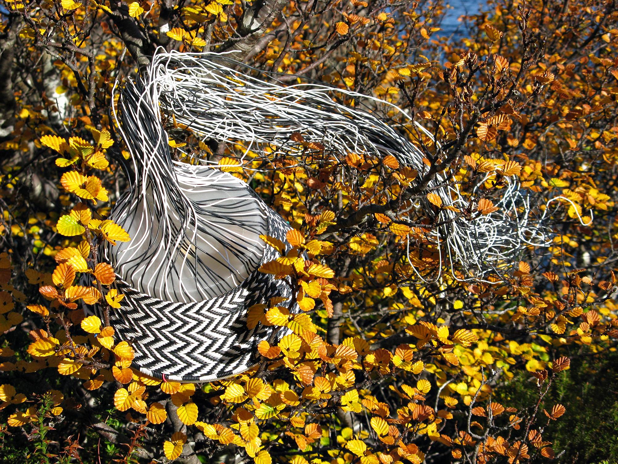 Black and white chevron wire basket in progress, nestled amongst the golden orange autumn foliage of Tasmania's deciduous beech.