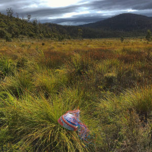 Telephone wire basket in progress, pictured on a clump of buttongrass, looking across to Mt Grey.
